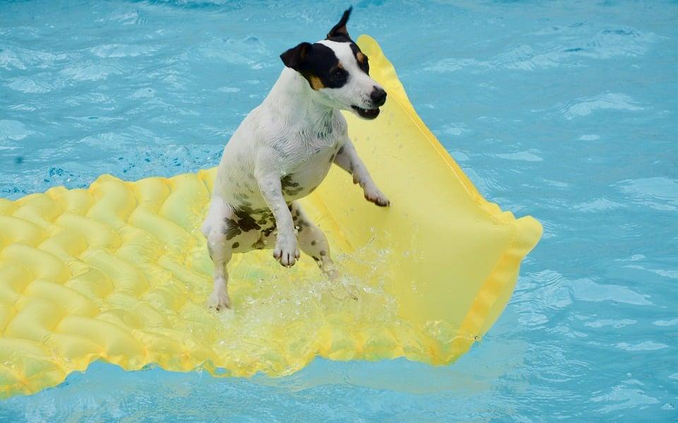 Danger chien et piscine
