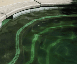 se débarrasser des algues piscine