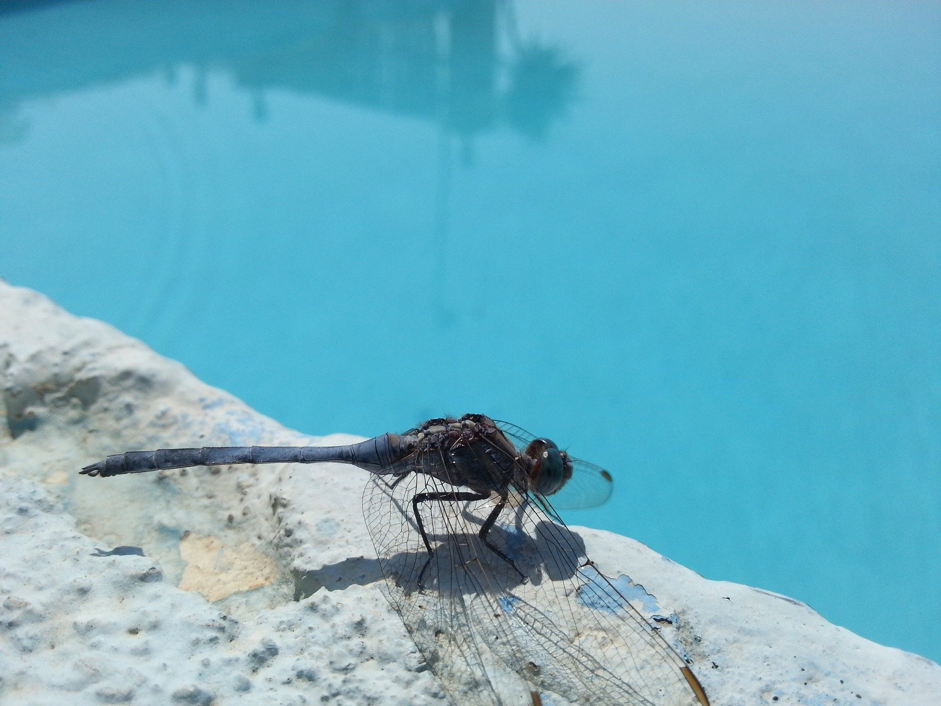 Comment se débarrasser des insectes autour d'une piscine